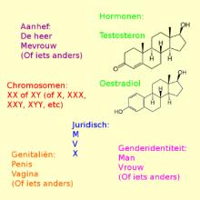 Geslacht: aanhef, hormonen, chromosomen, juridisch, genitaliën, genderidentiteit.